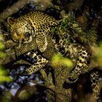 2d-leopard-tree