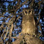 2f-night-owl